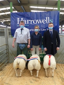 Christmas Show & Sale of Prime Sheep 2020
