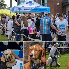 Blue Cross Dog Show August 2019