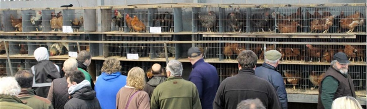 Thirsk Farmers Auction Market > Sales > Fur and Feather